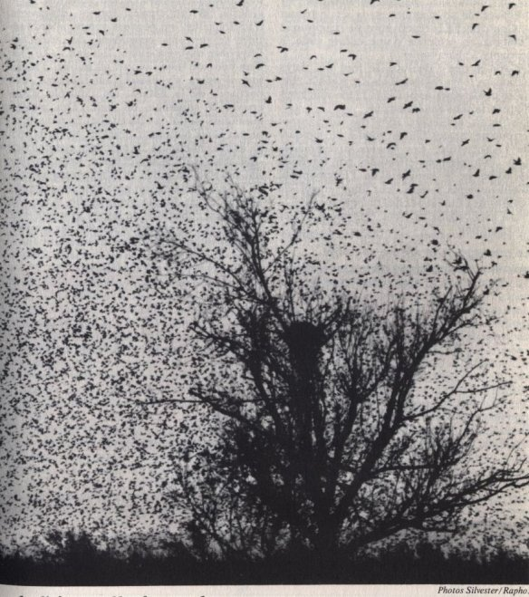 scan-oiseaux