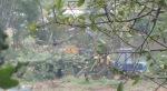 Tracteur grue et plateau qui transporte les arbres abattus à la broyeuse